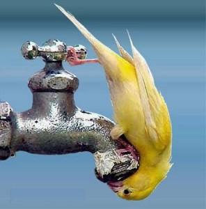WATER-CUT-IN-MUMBAI1-296x300